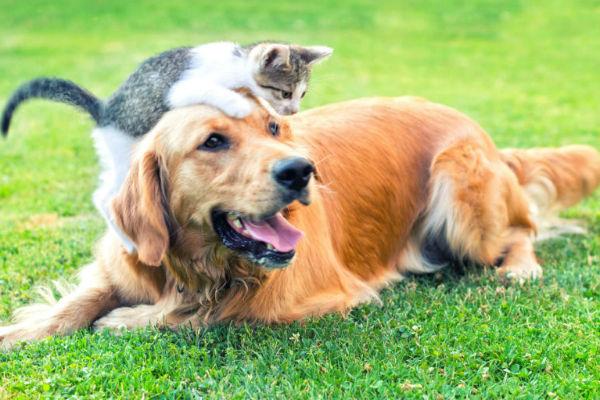 gattino e cane adulto su un prato