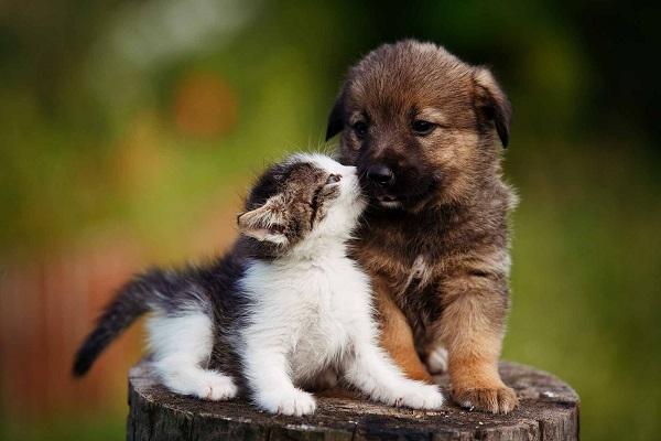 gattino e cagnolino imparano a conoscersi