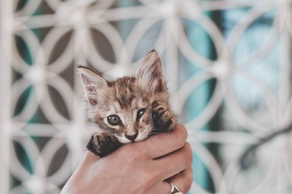 una donna tiene in mano un gattino