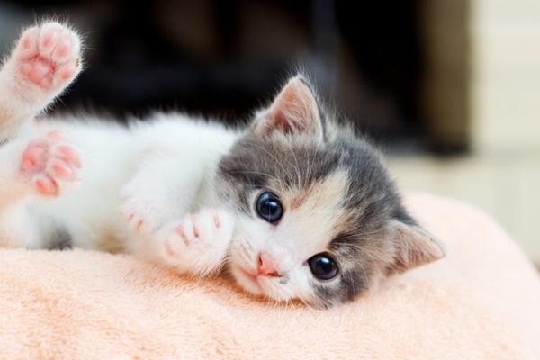 gattino dolce e tenero