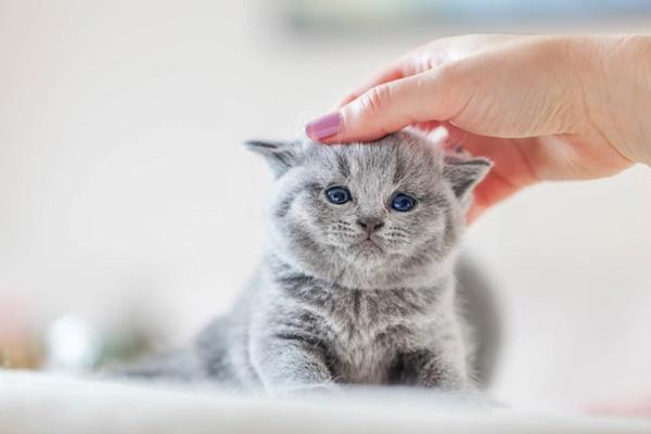 accarezzare la testa del gattino