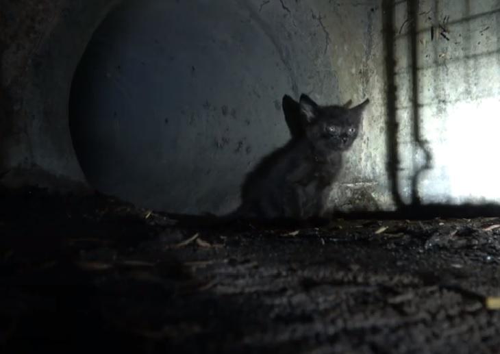 taco gattino lamenti isolato