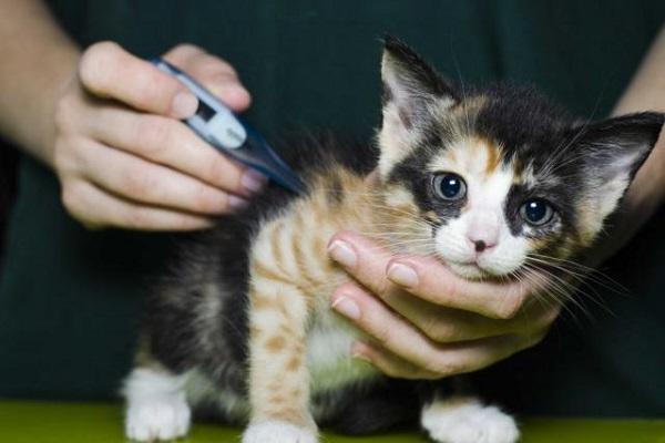 misurazione temperatura gattino