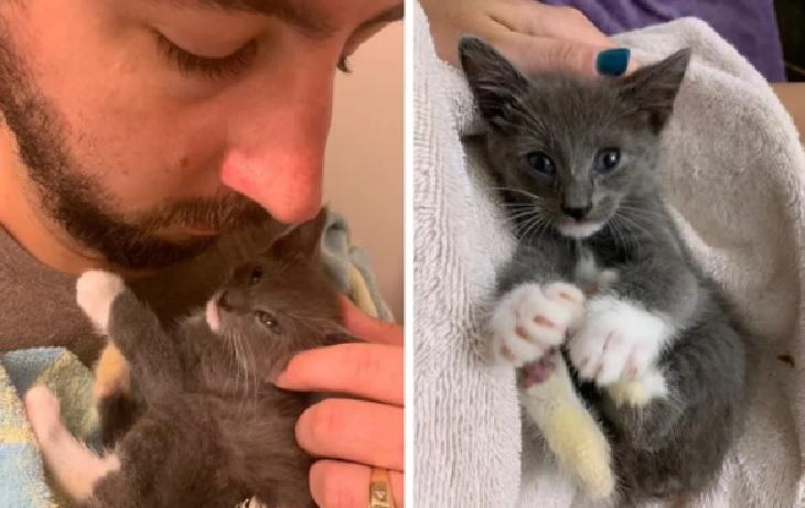 thumper gatto adozione famiglia