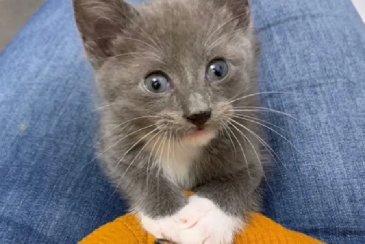 thumper gattino senza coda