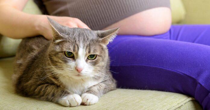 gatto accanto a donna incinta