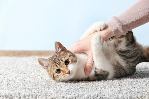 coccole a gattino