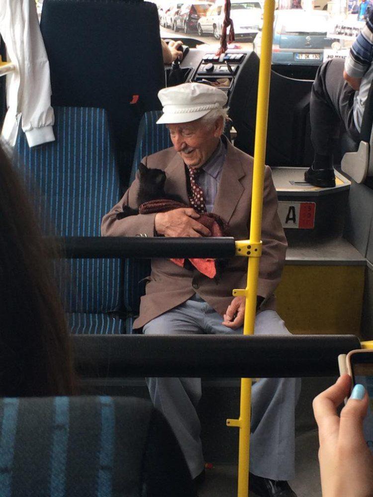 anziano gattino foto