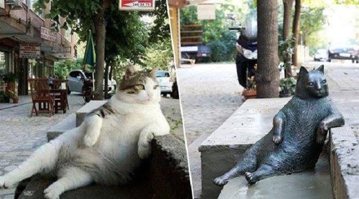 gatto statua posa