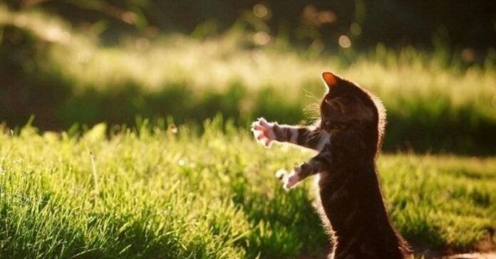 anziano gattino abbraccio