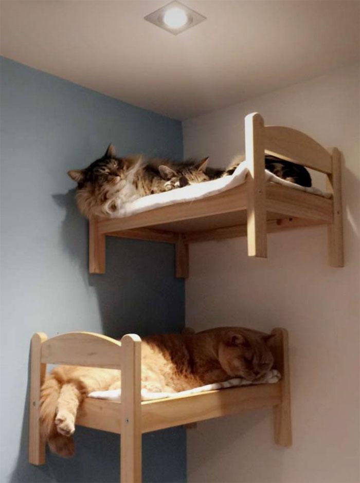 gattini nei lettini