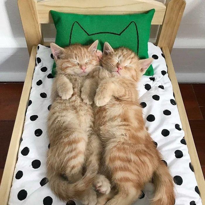 gatti nel letto