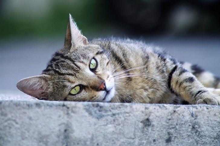 gattino foto salvato