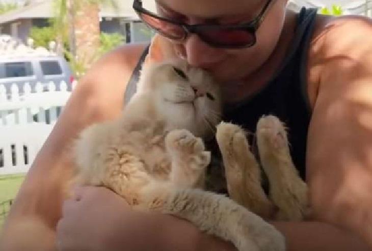 valentino gattino scopre amore famiglia