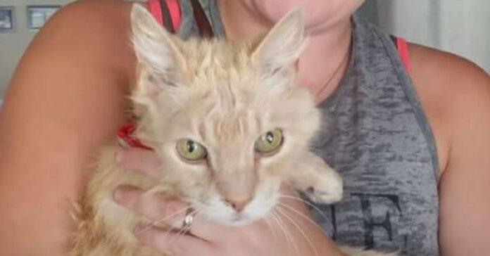 valentino gattino salvato sotto auto incandescente
