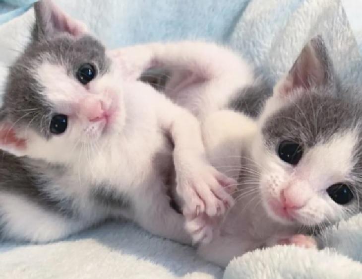whisky pippa gatti amore famiglia