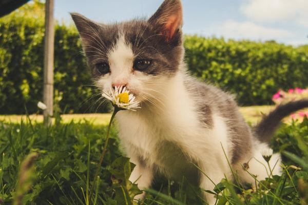 gattino in campagna