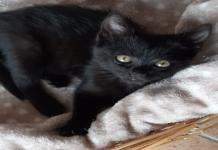 Batman gatto nero da adottare