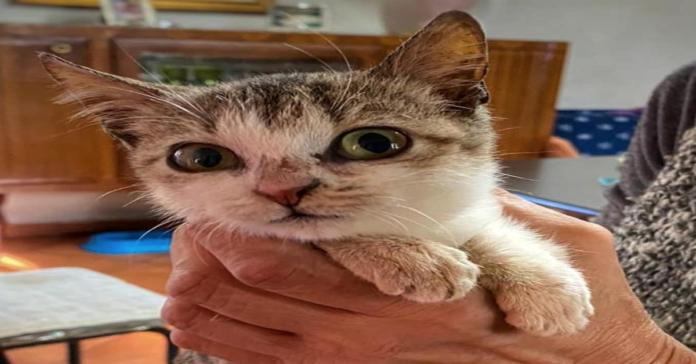 Memole gattina da adottare