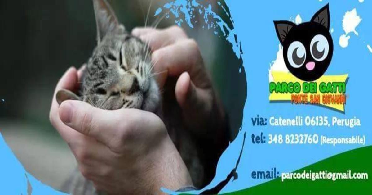 Lilli gatta da adottare, logo Parco dei gatti di Ponte San Giovanni