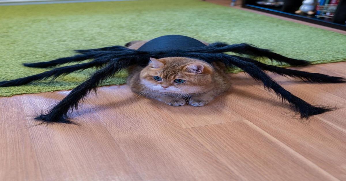 Hosico travestito da ragno per Halloween