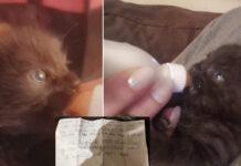 3 gattini vengono lasciati in un rifugio con una lettera di un bambino