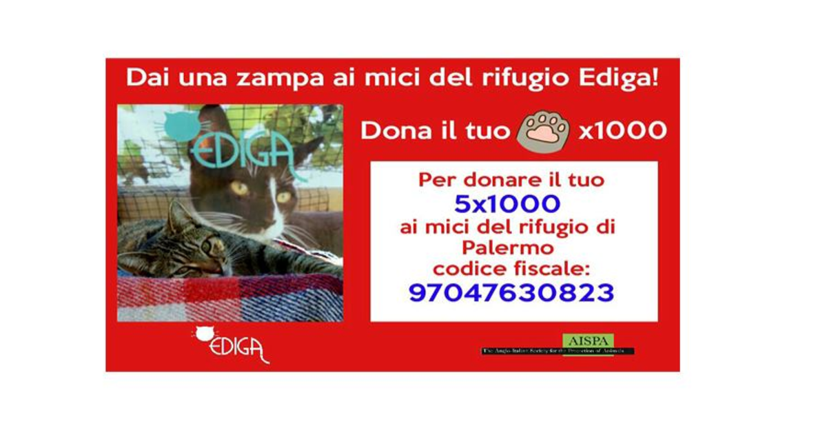 Amanita, gatta da adottare, logo rifugio Ediga di Palermo