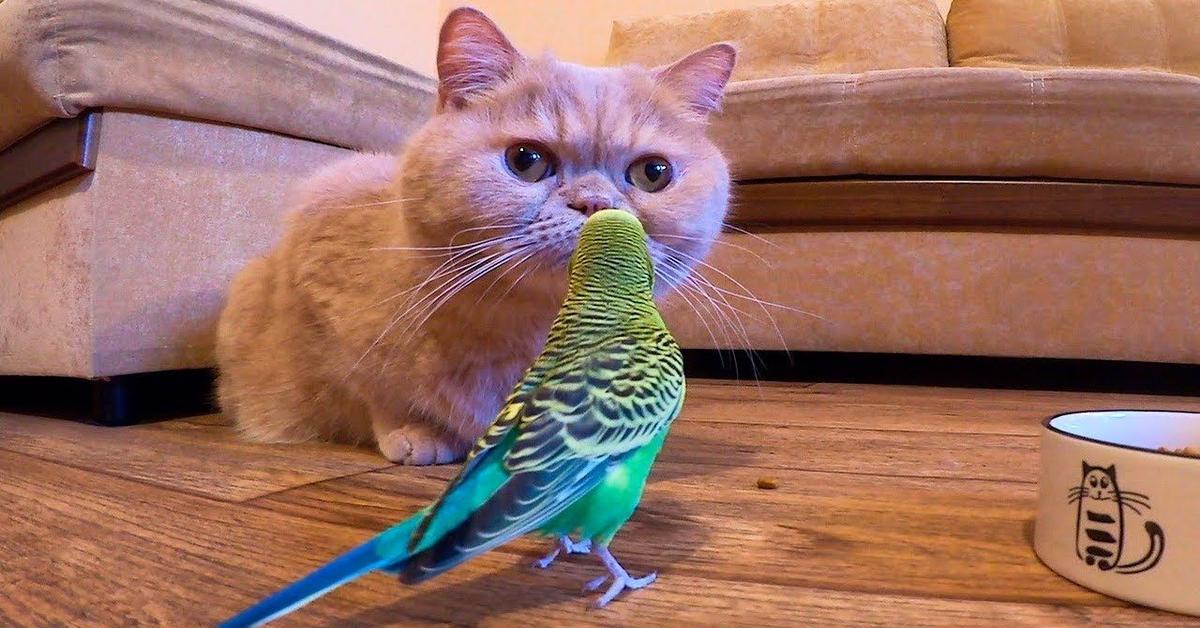 Gatto e pappagallo giocano insieme