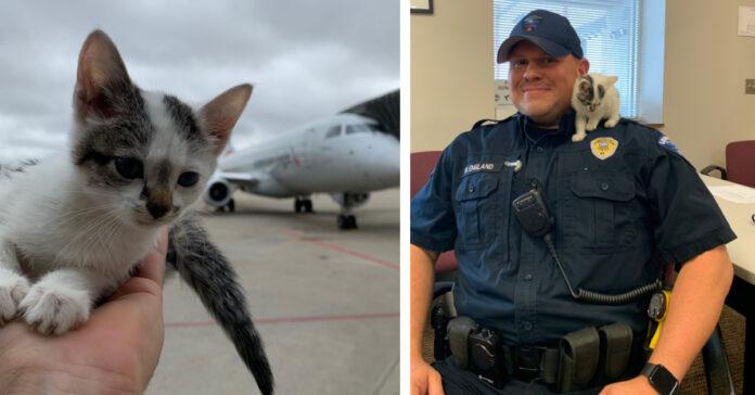 Gatto in aeroporto