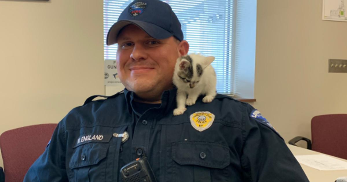 Gatto con un poliziotto