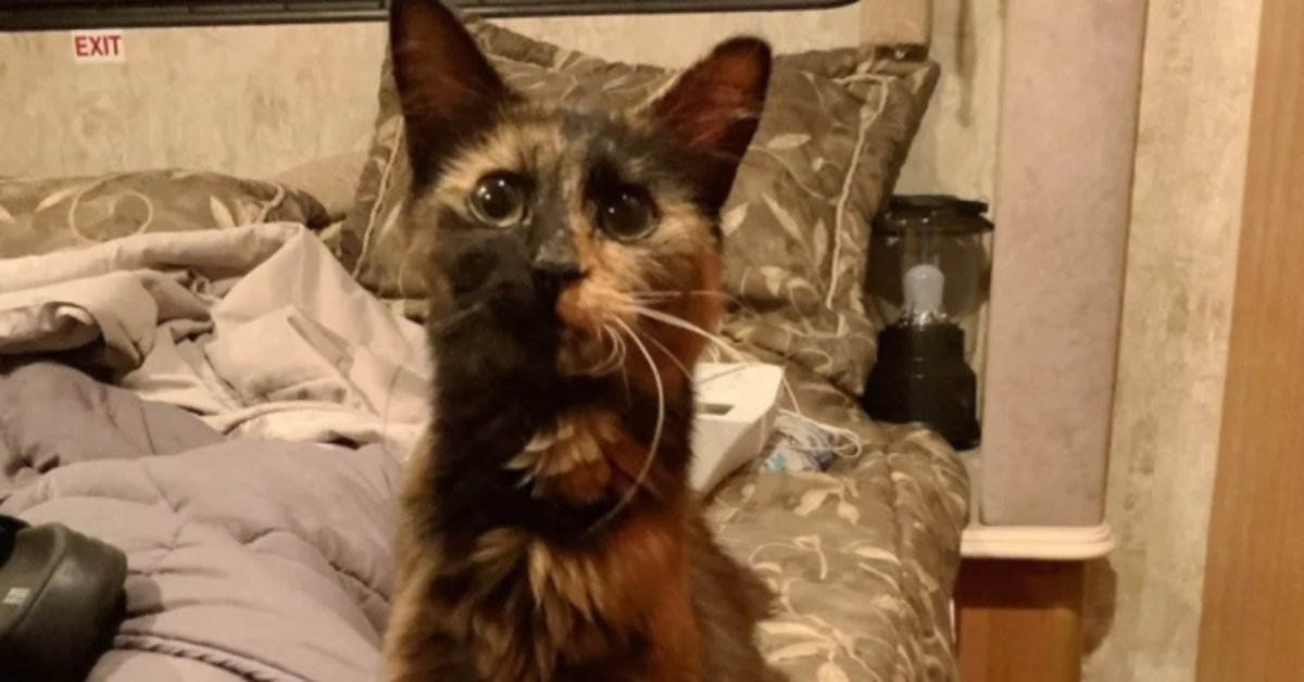 gattina sul letto