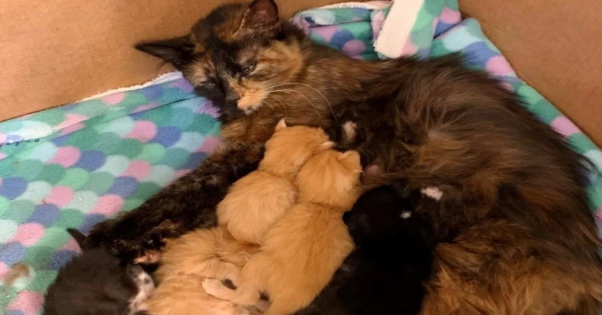 gattina allatta i suoi cuccioli