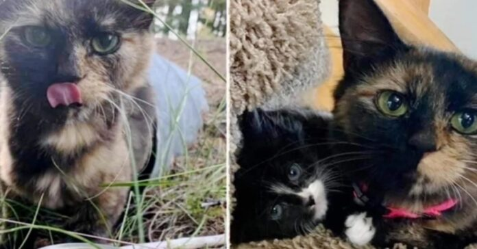 gattina trovata in un tubo di scarico