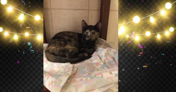 Lilli gatto da adottare con luci natale