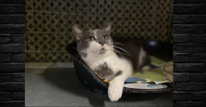 Mina gatta da adottare nella cuccia