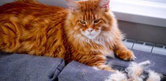 gatto perde ciuffi di pelo