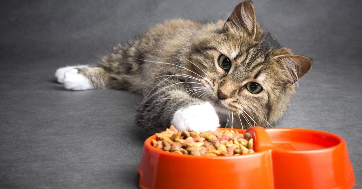 Gattini e gatti adulti: quando cambia il cibo