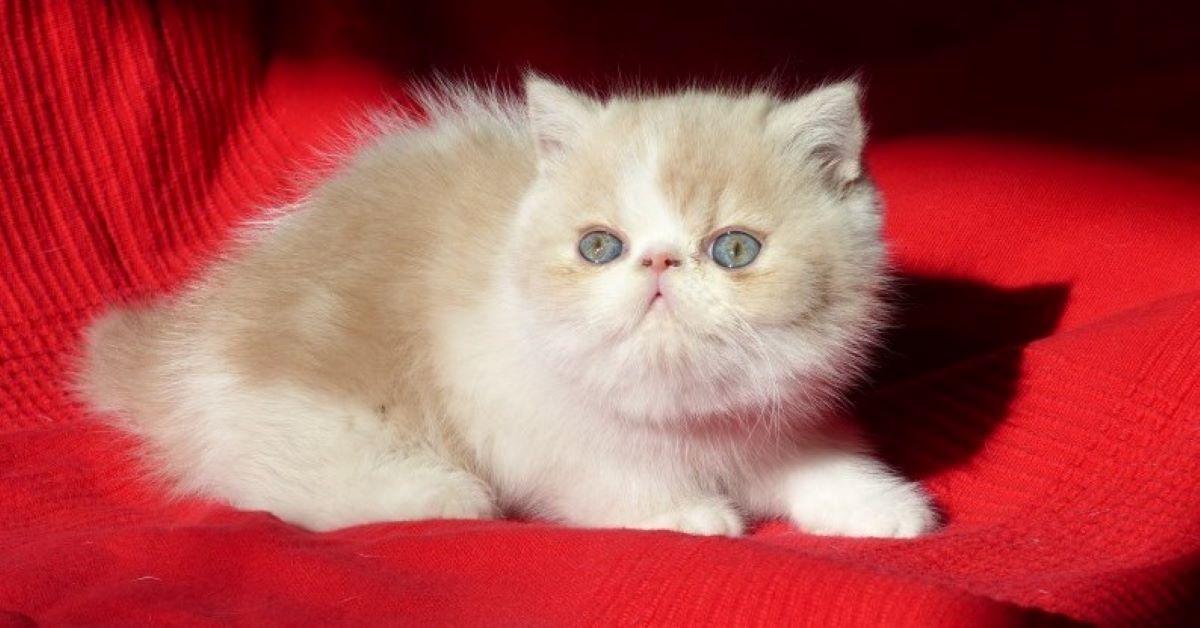 gattino rimasto piccolo