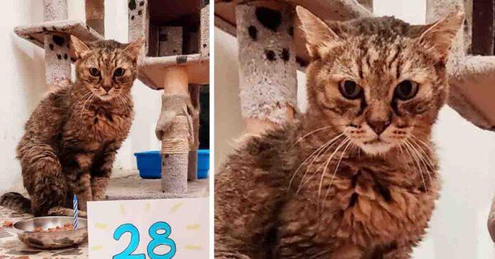 Geremia gatto anziano