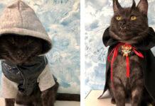 Gattino vampiro