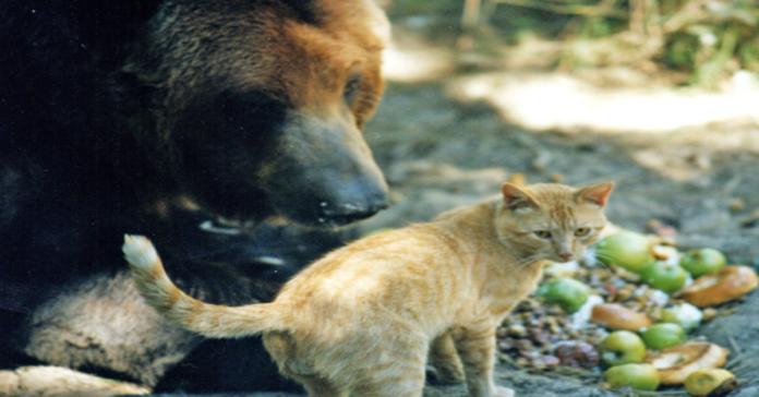 Tabby con il suo amico orso Griz