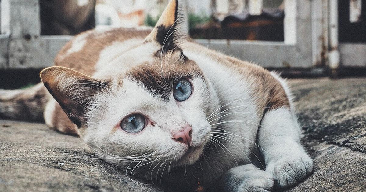 Gatto sdraiato che osserva