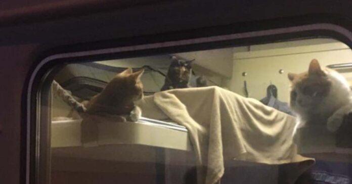 Gattini in un treno