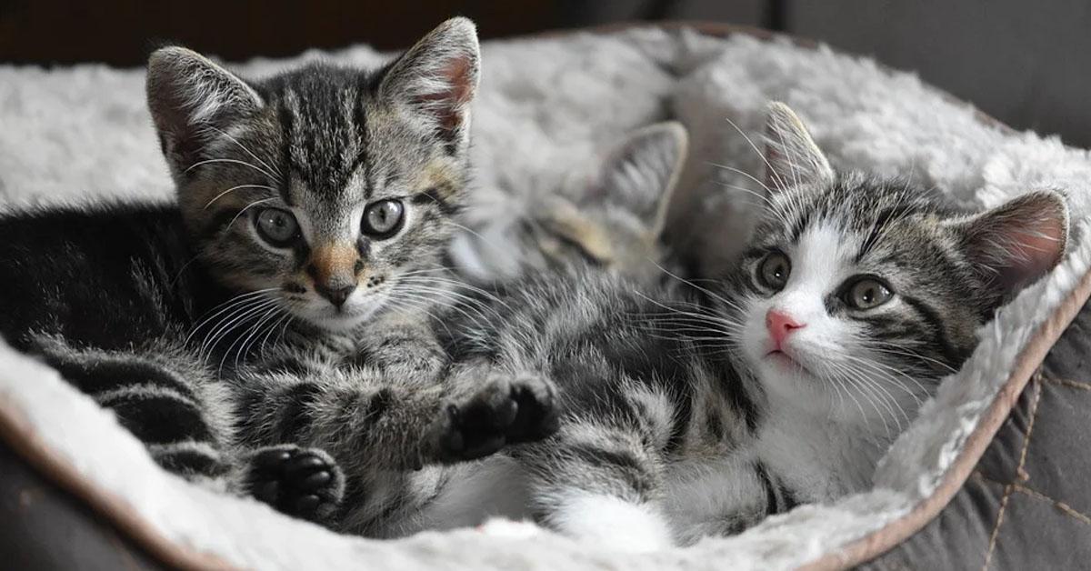 Due gattini in una cuccia