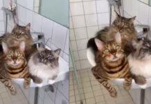 Tre gattini dentro ad un lavandino