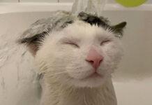 Gatto fa il bagno
