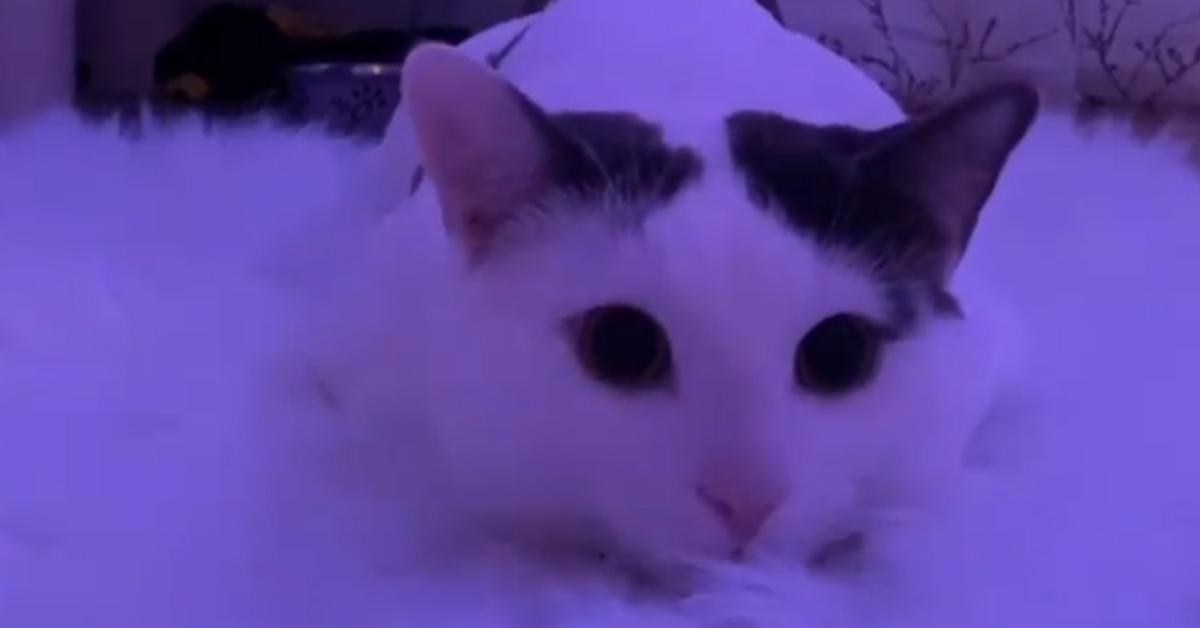 Gatto su una cuccia