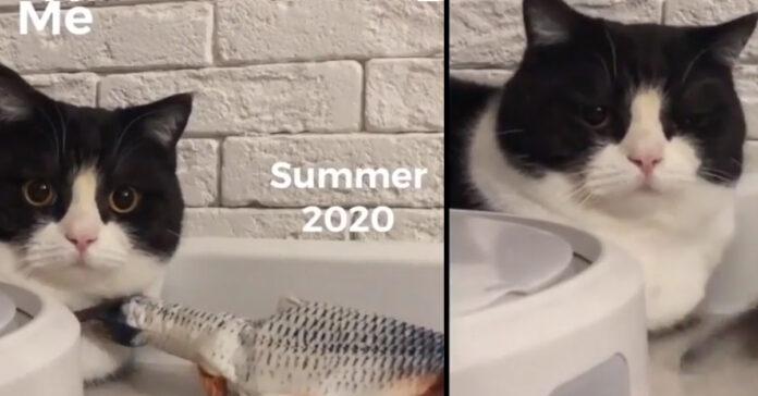 Gattino riassunto 2020