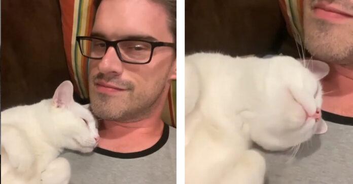 Gatto dorme sulla spalla del proprietario