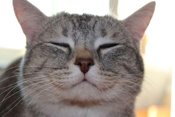 come capire se il gattino è felice